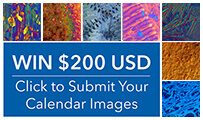 Buehler Microstructure Calendar Submission